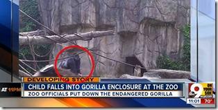 gorillaboyzoo