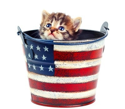 funny-pictures-cyoot-kitteh-of-teh-day-happeh-fourth-ob-jooly1