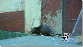 rat-girl-problem