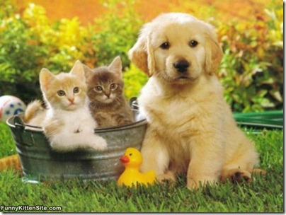 puppy_with_kittens