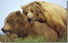 bearsinwoods