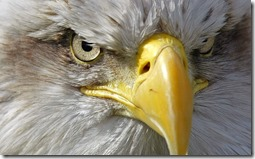 eagles234