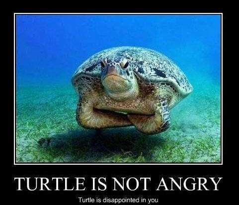 disappointed_turtle