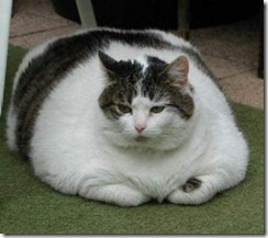 Obese-cat