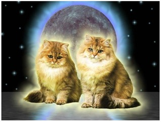 spacekittens
