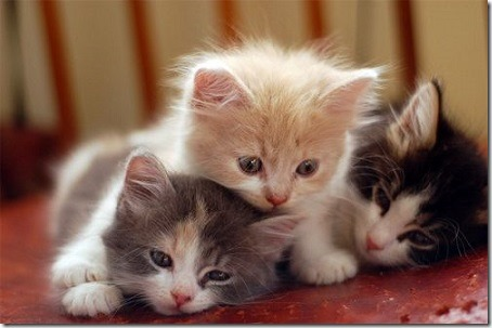 kittens_three