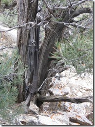 Nevada-Park-Winchester-73-20-on-tree-768x1024