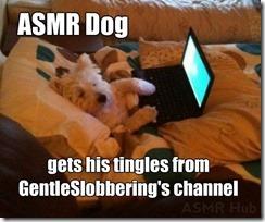 ASMR-Dog