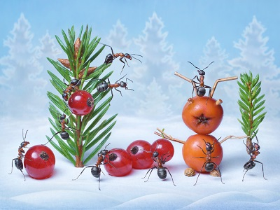 -ants-off-christmas-trees.jpg