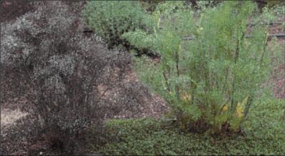 04-95-026-01-fennel2.jpg