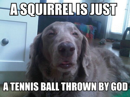 05-funny-dog-meme.jpg