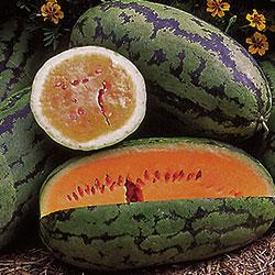 1108-watermelon-orangeglo.jpg