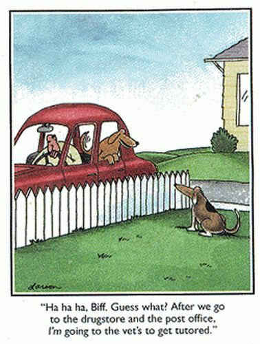 288674c2d17547b9805710aa611be4ee--funniest-cartoons-dog-cartoons.jpg