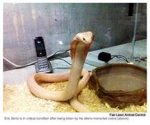 340x_snake.jpg
