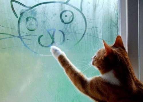 Artistic-Cat-Drawing-on-Window.jpg
