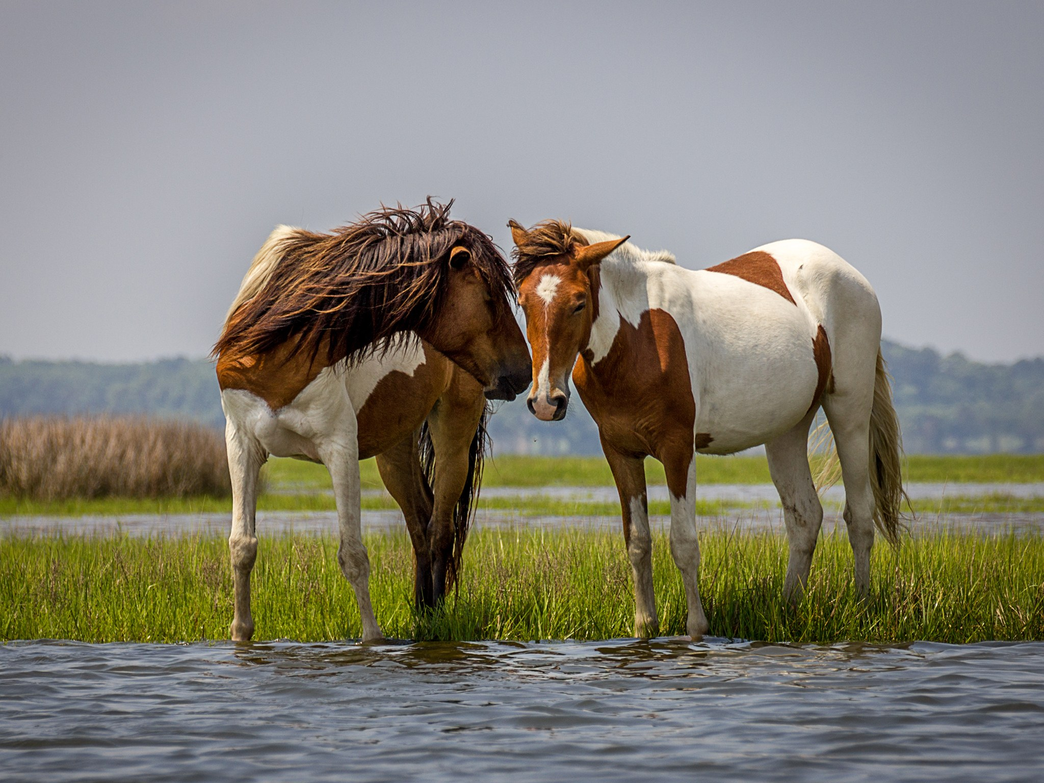 Assateague-Island-GettyImages-453379671.jpg