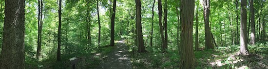 AudubonTrees.JPG