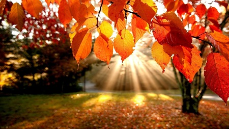 Autumn-Leaves-sunshine.jpg
