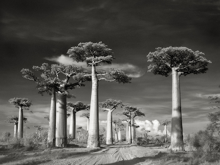 Avenue-of-the-Baobabs_02.jpg