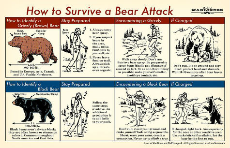 Bear-Attack-2.jpg