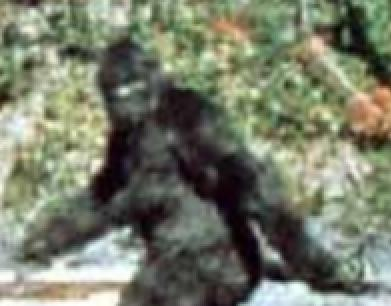 Bigfoot_Closeup.jpg