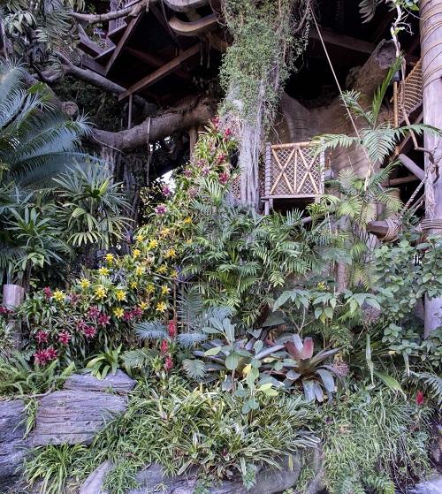 Bromeliadss.jpg