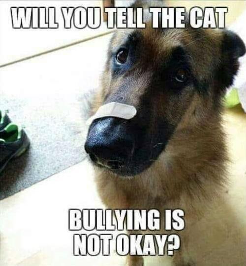 Bullied-Boy.jpg