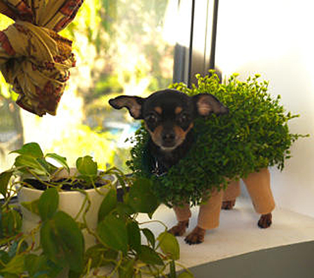 CHIA-PET-DOG-03-1320244628.jpeg