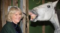 Camilla-Horse1.jpg