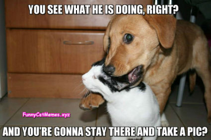 Cat-and-dog-Funny-Cat-Memes.jpg