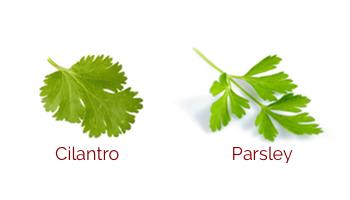 Cinatro_vs_parsley.jpg