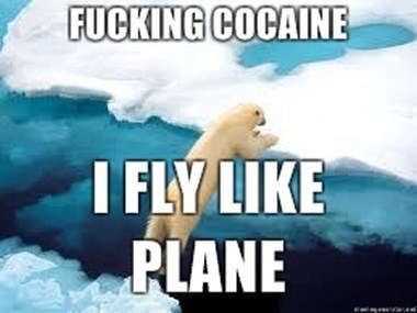 Cokebear flies2.jpg