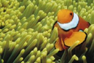 CoralSpawn.jpg