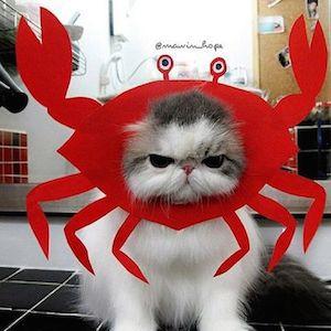 CrabbyKitty.JPG