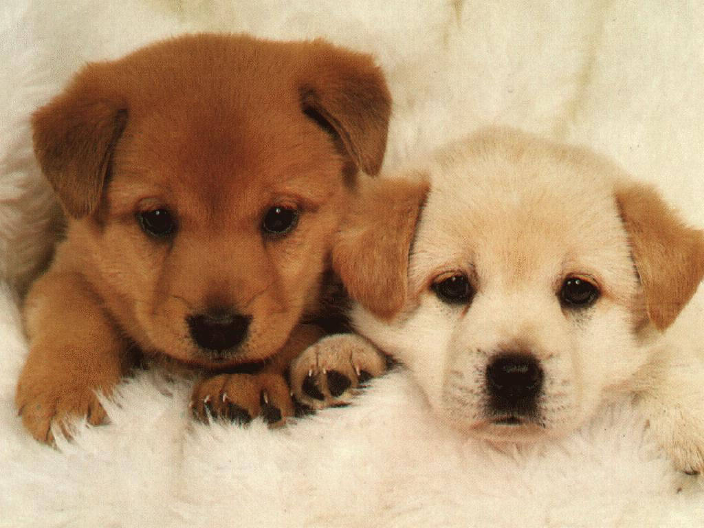 Cute puppies.jpg