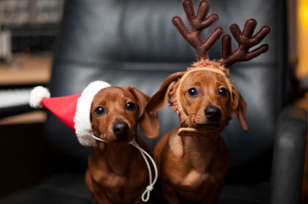 Cute-Christmas-Animals-51.jpg