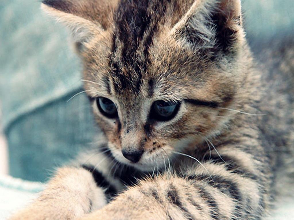 Cute-kitten-cute-kittens-18565723-1024-768.jpg