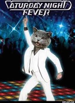 DiscoFeverKitty.jpeg