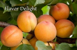 Flavor-Delight-2012.jpg