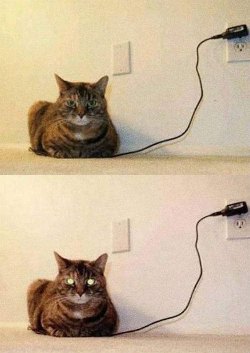 How-to-know-when-your-cat-is-fully-charged.jpg