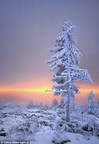 IcySnowTree.jpg