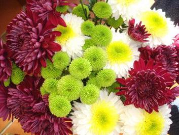 KTchrysanthemums.jpg