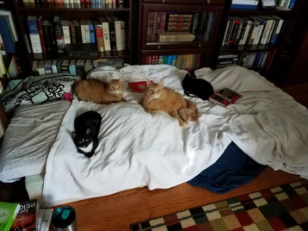 Kitty Convention.jpg
