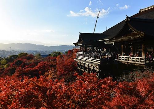 KyotoFoliage.jpg