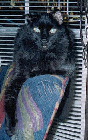 MA_Chair.jpg