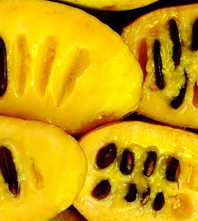 Pawpaw-fruit.jpg