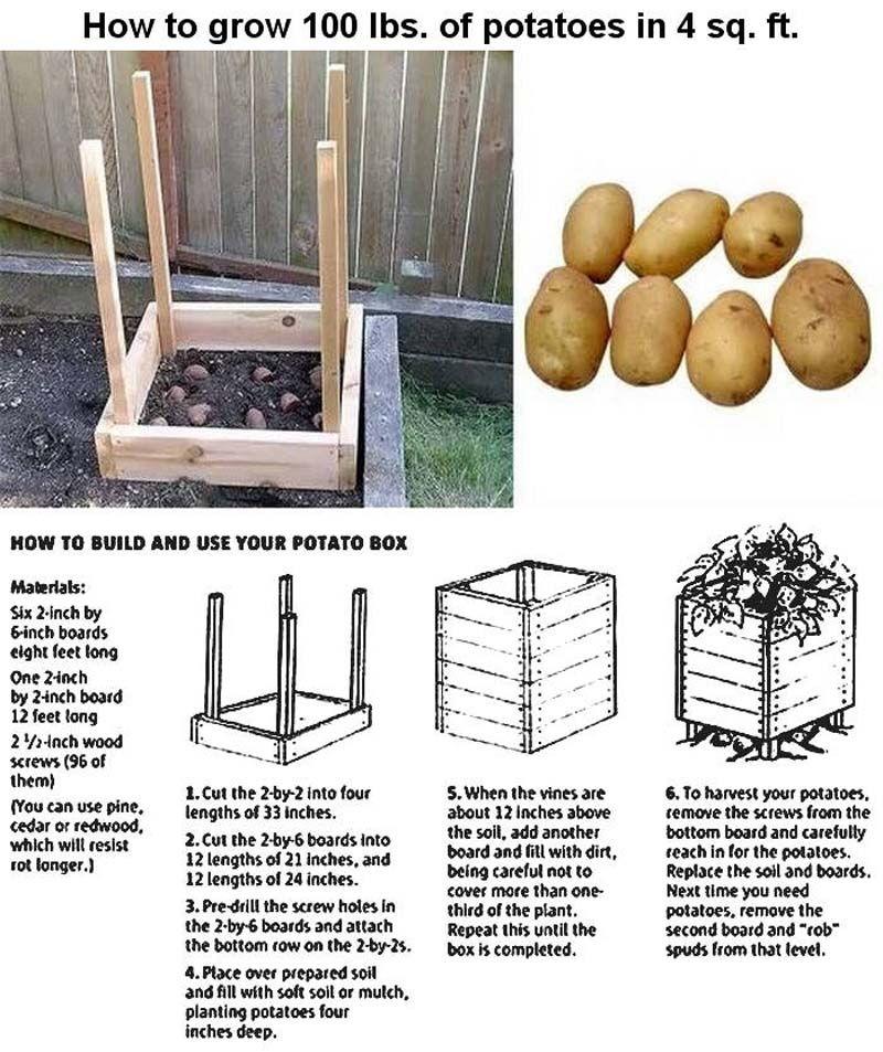 Potatoes1.jpg