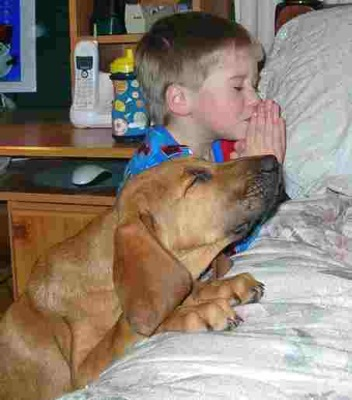 Praying-lab-mix.jpg