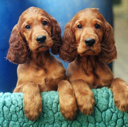 Puppies-Oban-Odessy.jpg