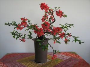 Quince-bonsai-06-300x225.jpg